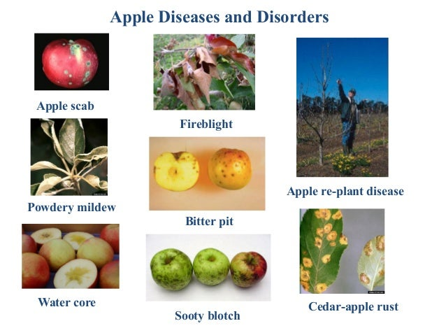 Pest management options/strategies for an apple orchard