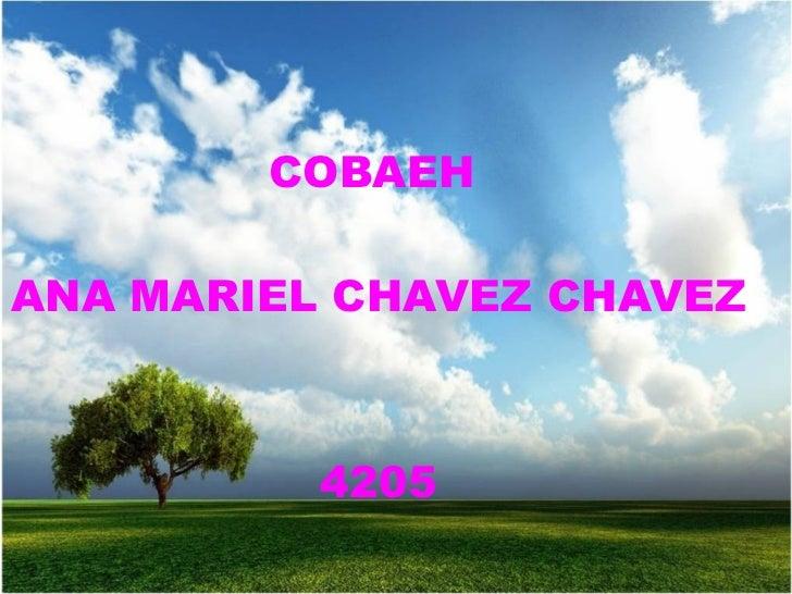 COBAEH  ANA MARIEL CHAVEZ CHAVEZ 4205