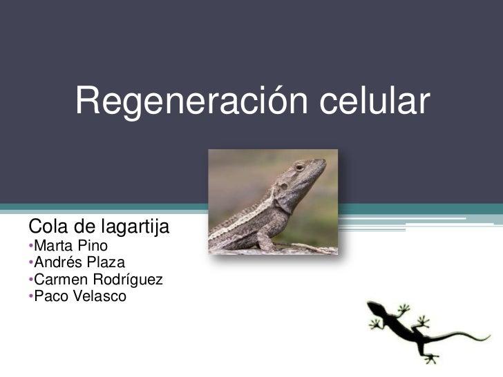 Regeneración celularCola de lagartija•Marta Pino•Andrés Plaza•Carmen Rodríguez•Paco Velasco
