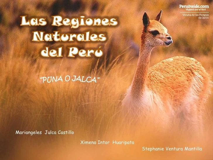 "Las Regiones Naturales<br /> del Perú<br />""PUNA O JALCA""<br />MariangelesJulca Castillo <br />Ximena IntorHuaripata<br />..."