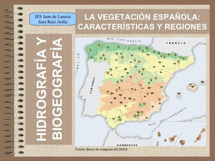 HIDROGRAFÍA Y BIOGEOGRAFÍA LA VEGETACIÓN ESPAÑOLA: CARACTERÍSTICAS Y REGIONES Fuente: Banco de Imágenes del CNICE IES Juan...