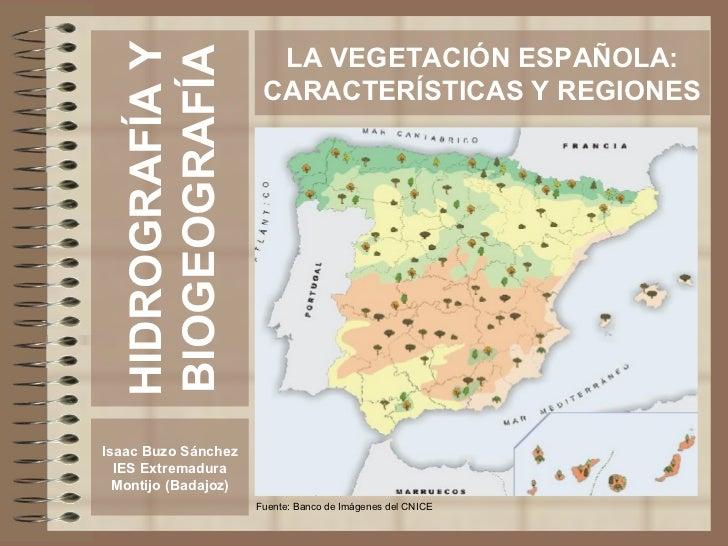 HIDROGRAFÍA Y BIOGEOGRAFÍA Isaac Buzo Sánchez IES Extremadura Montijo (Badajoz) LA VEGETACIÓN ESPAÑOLA: CARACTERÍSTICAS Y ...