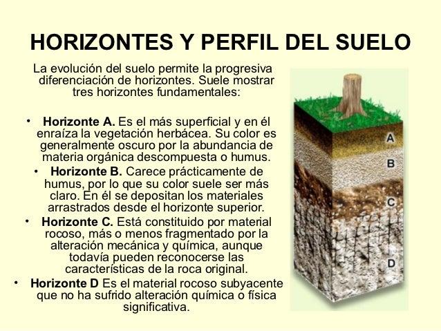Regiones biogeogr ficas de espa a for Perfil del suelo wikipedia