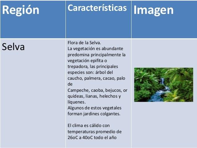 Región   Características                Imagen         Flora de la Selva.Selva    La vegetación es abundante         predo...