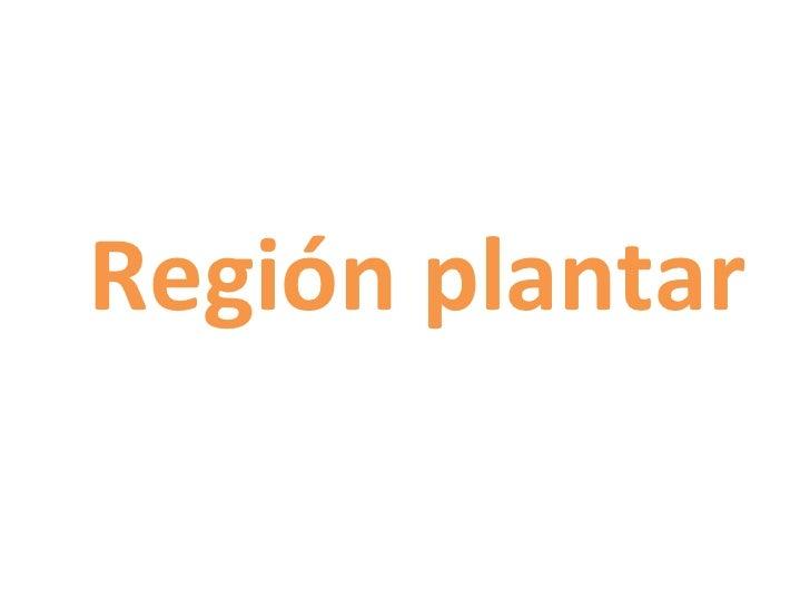 Region plantar