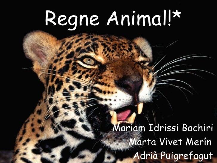 Regne Animal!*      Mariam Idrissi Bachiri         Marta Vivet Merín          Adrià Puigrefagut