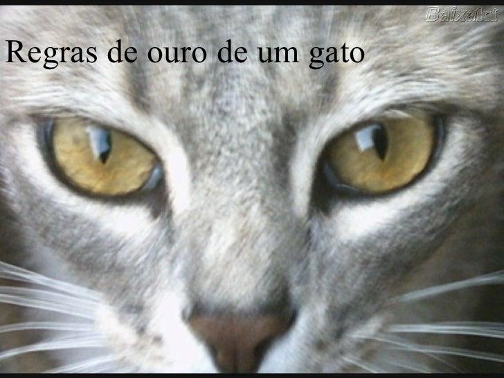 Regras de ouro de um gato