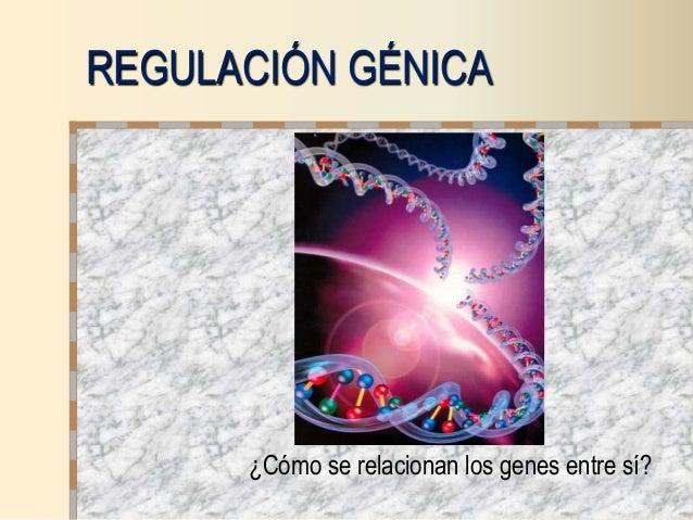 REGULACIÓN GÉNICA ¿Cómo se relacionan los genes entre sí?
