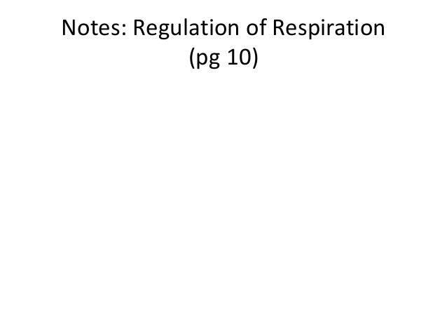 Notes: Regulation of Respiration            (pg 10)