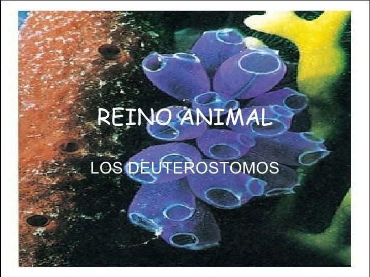 REINO ANIMAL LOS DEUTEROSTOMOS