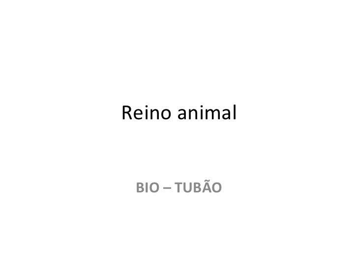 Reino animal BIO – TUBÃO