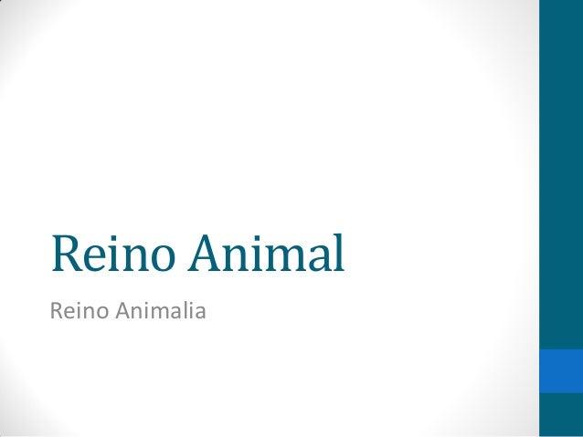 Reino Animal Reino Animalia