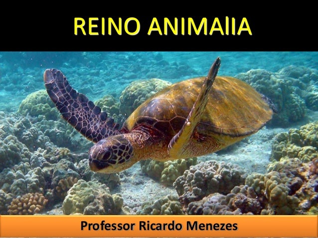 REINO ANIMAlIA  Professor Ricardo Menezes