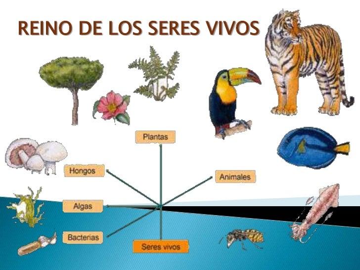REINO DE LOS SERES VIVOS<br />