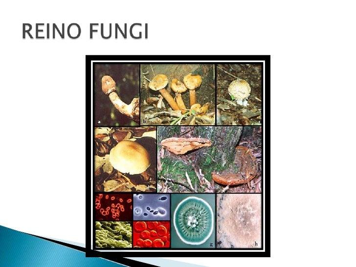REINO FUNGI<br />