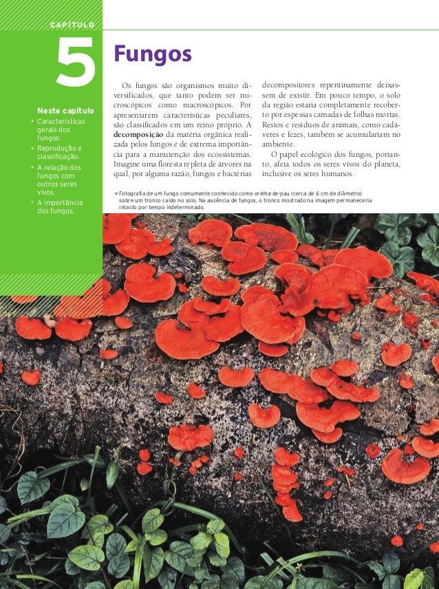 5                Capítulo                                     Fungos                                        Os fungos são ...