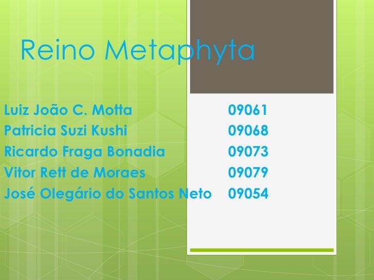 Reino Metaphyta<br />Luiz João C. Motta09061<br />Patricia Suzi Kushi09068<br />Ricardo Fraga Bonadia09073<br />Vitor...