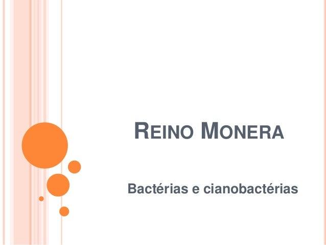 REINO MONERA Bactérias e cianobactérias
