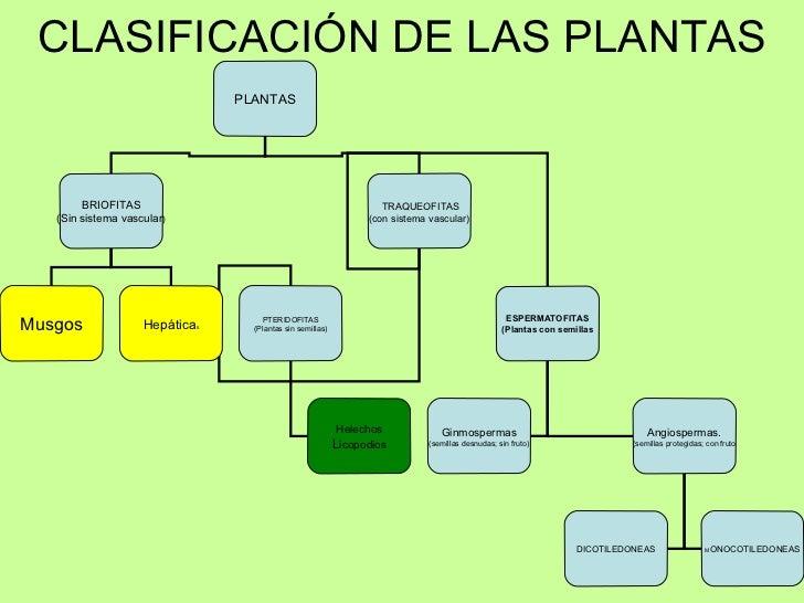 Reino plantas for Clasificacion de los planos arquitectonicos