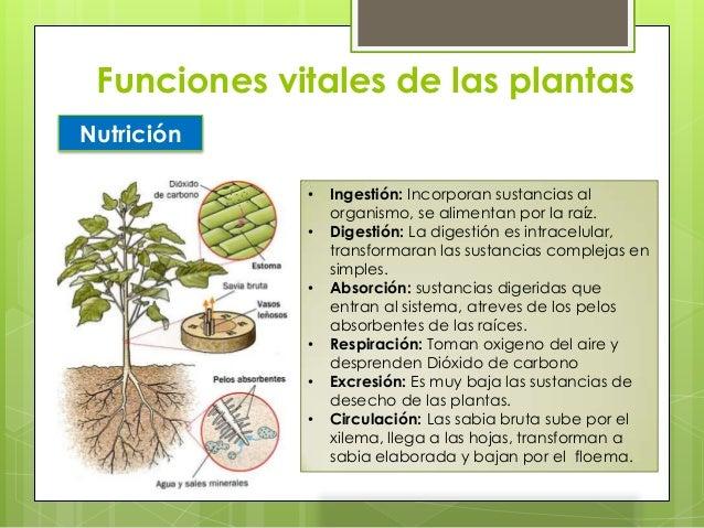 Reino plantae for Funcion de las plantas ornamentales