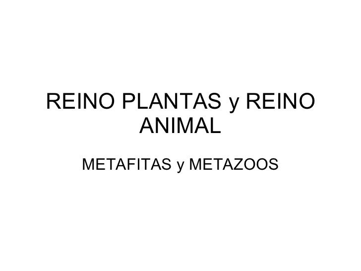 REINO PLANTAS y REINO ANIMAL METAFITAS y METAZOOS