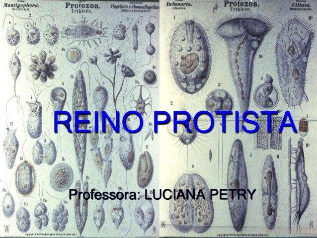 REINO PROTISTA Professora: LUCIANA PETRY