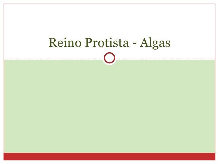 Reino Protista - Algas
