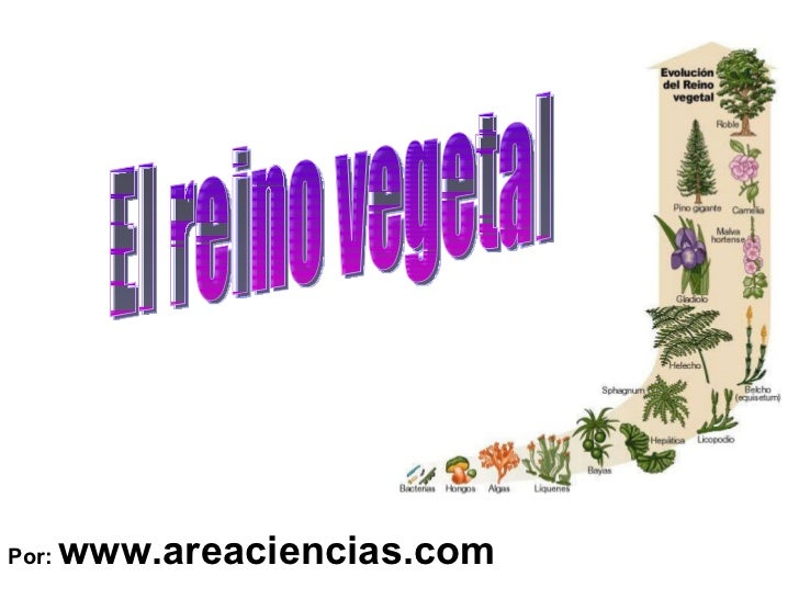 Por:  www.areaciencias.com El reino vegetal