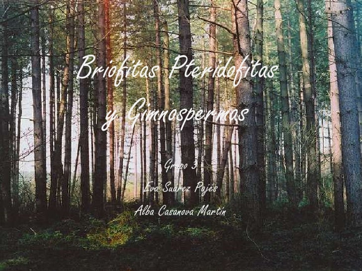 Briofitas Pteridofitas  y Gimnospermas            Grupo 3       Eva Suárez Pajés      Alba Casanova Martín