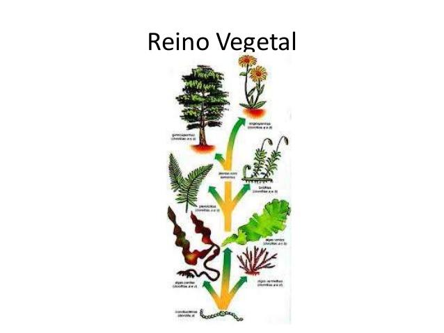 IMAGENES DE REINO VEGETAL - Imagui