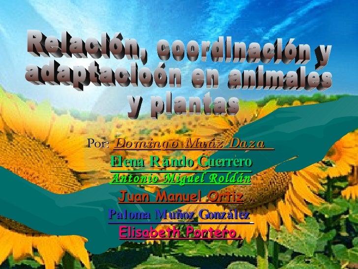 RelacióN, CoordinacióN Y AdaptacióN En Animales Y Plantas