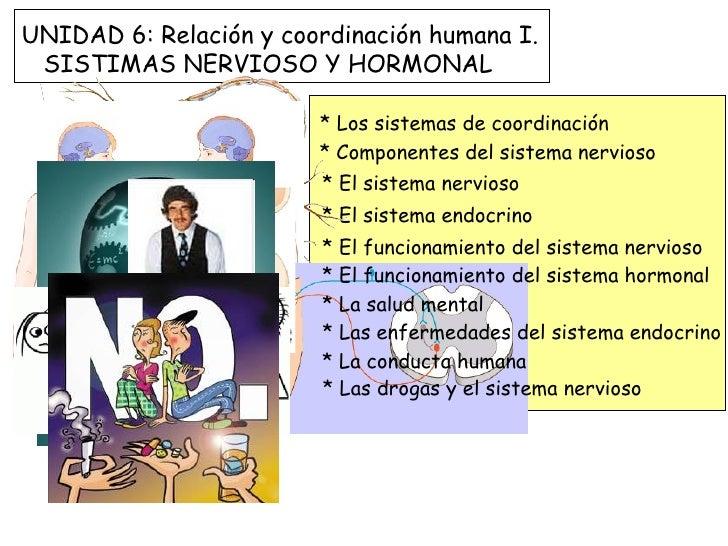 UNIDAD 6: Relación y coordinación humana I. SISTIMAS NERVIOSO Y HORMONAL                        * Los sistemas de coordina...