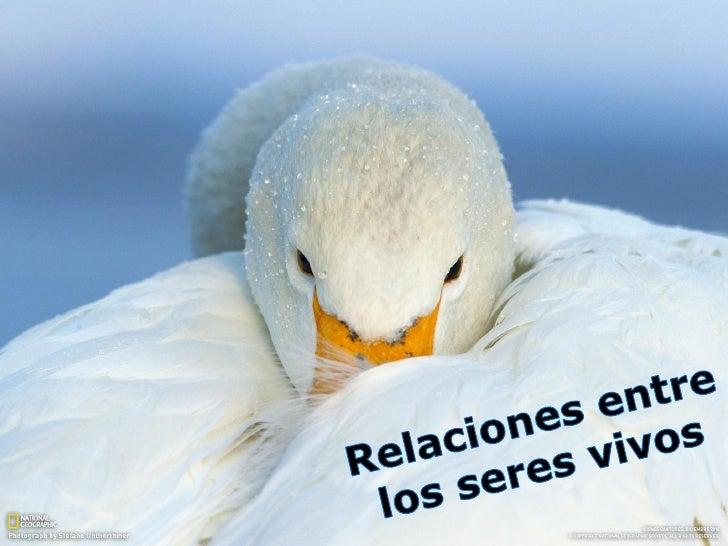 Relación Intraespecífica Relaciones que se  establecen entre los  individuos de una  población   Cooperación   Competen...