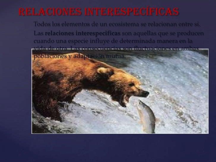 Relaciones interespecíficas  Todos los elementos de un ecosistema se relacionan entre sí.  Las relaciones interespecificas...