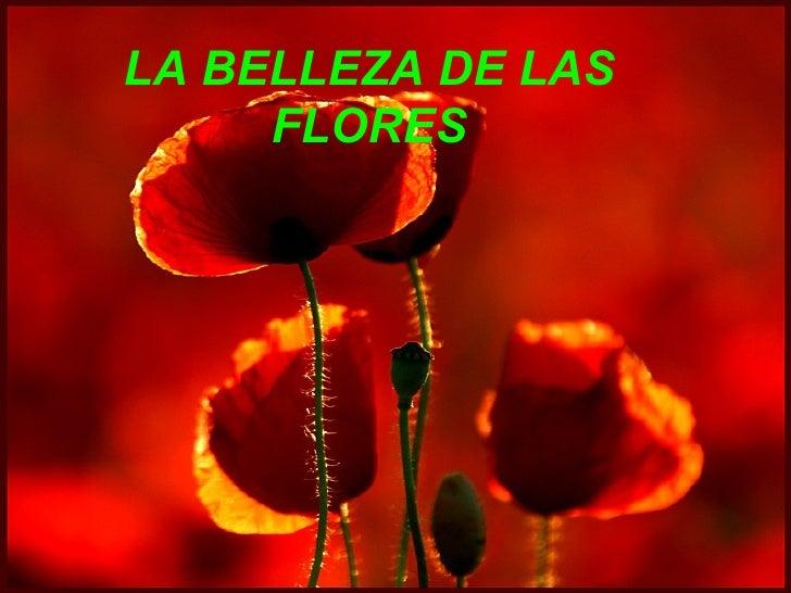 LA BELLEZA DE LAS FLORES