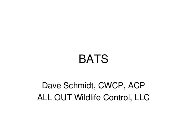 BATS Dave Schmidt, CWCP, ACP ALL OUT Wildlife Control, LLC