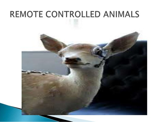 Remote controlled animals (cyborgs)