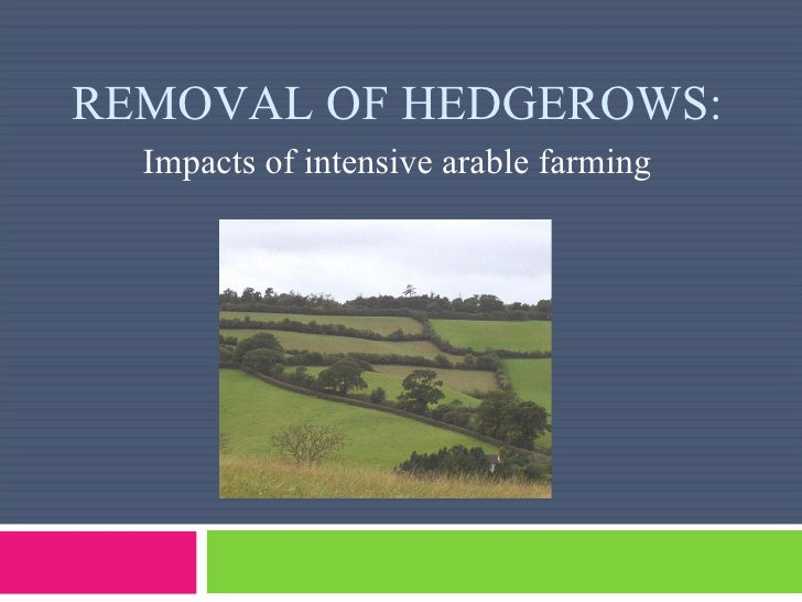 REMOVAL OF HEDGEROWS: Impacts of intensive arable farming