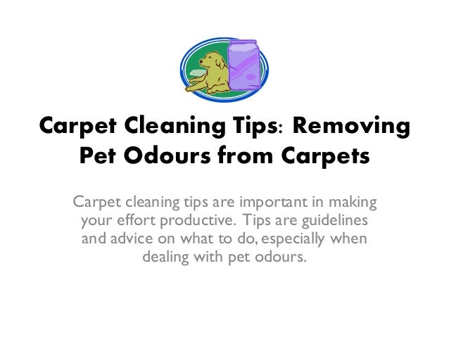 Carpet Cleaning Tips Removing Pet Odours From Carpets