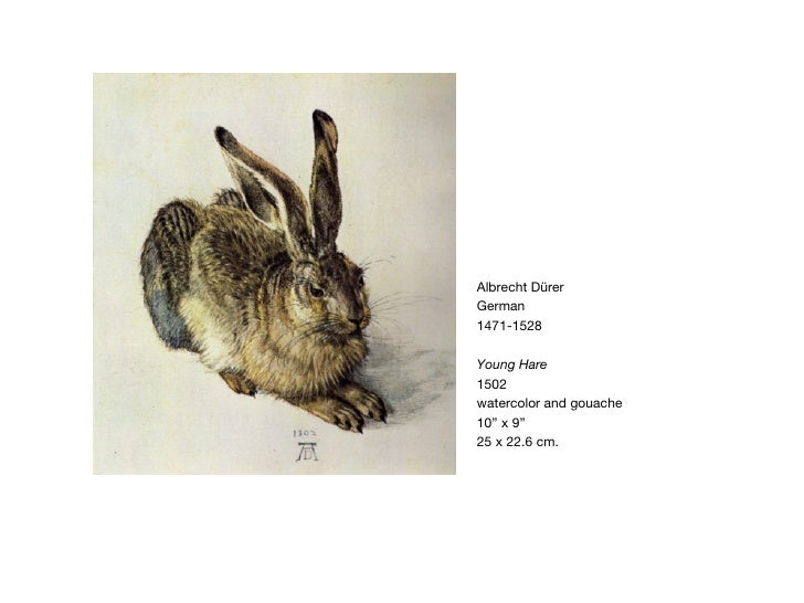 "Albrecht D ürer   German 1471-1528 Young Hare 1502 watercolor and gouache 10"" x 9"" 25 x 22.6 cm."