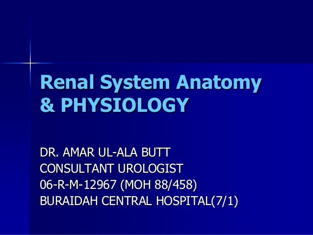 Renal anatomy& physiology