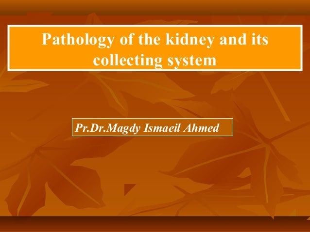 Renal pathology (dr magdy ismail)   copy