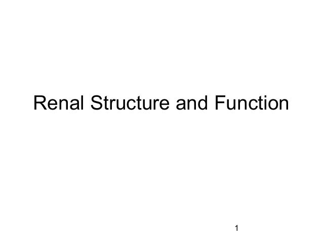 Renal Structure and Function                     1