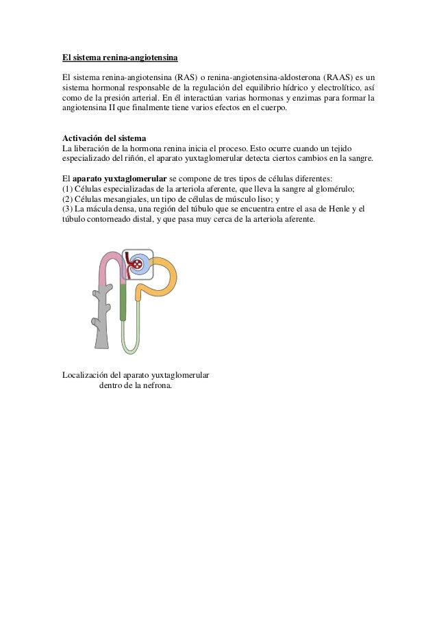 El sistema renina-angiotensina El sistema renina-angiotensina (RAS) o renina-angiotensina-aldosterona (RAAS) es un sistema...