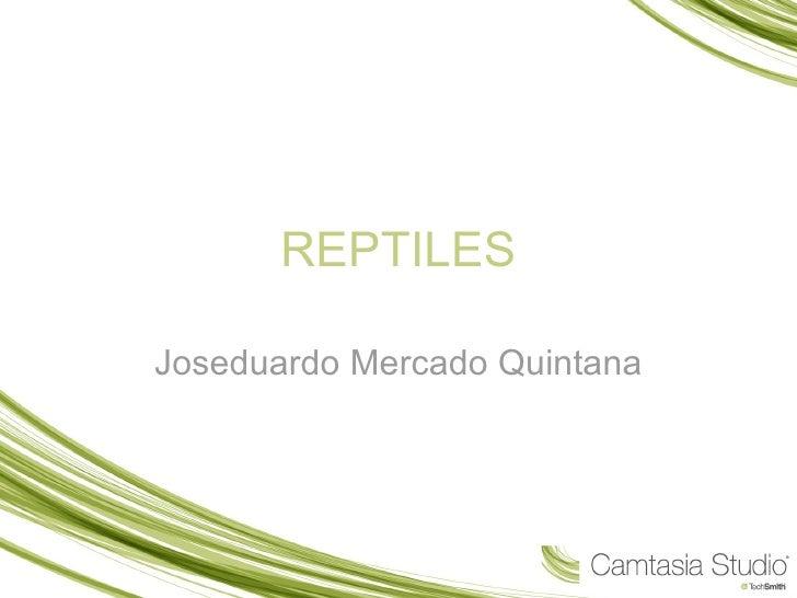 REPTILES Joseduardo Mercado Quintana