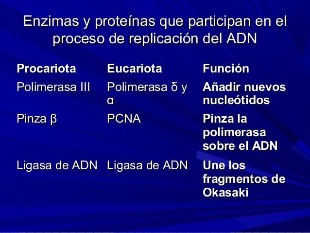 Replicaci 243 N Del Adn