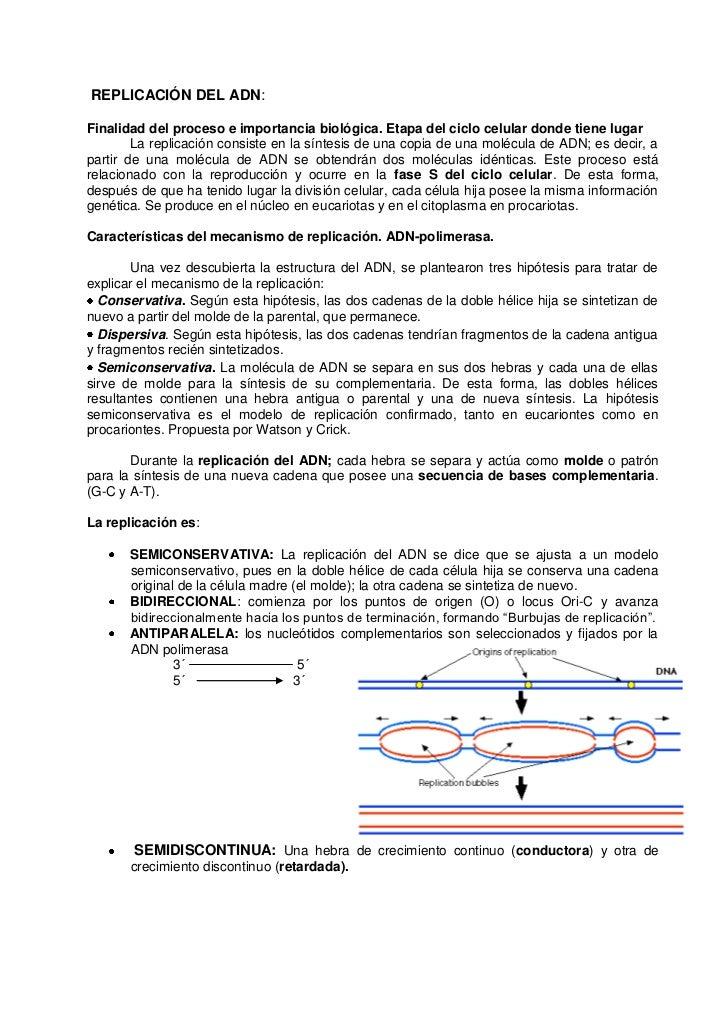 REPLICACIÓN DEL ADN:  Finalidad del proceso e importancia biológica. Etapa del ciclo celular donde tiene lugar         La ...
