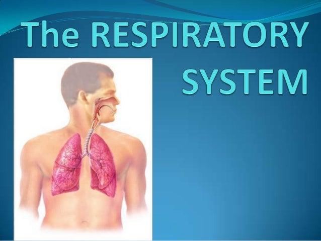 >> is consist of the :   Nose                         Pharynx(throat)                         Larynx(voice box)           ...