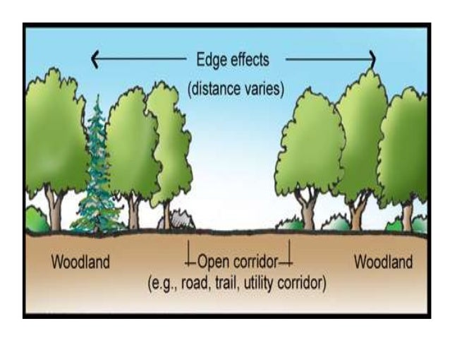 Ecotone And Edge Effects Amp Ecological Succession