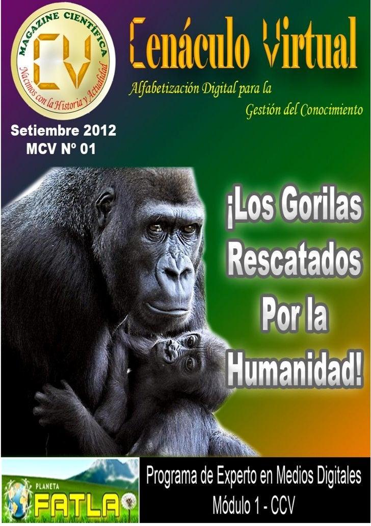 La Humanidad y diversas Organizaciones en el Mundo, luchanindesmayablemente por el rescate y supervivencia de losGorilas, ...